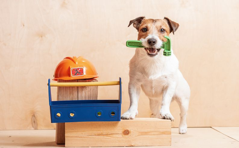 7 Tips to Keep Your Pets Safe During a Remodel